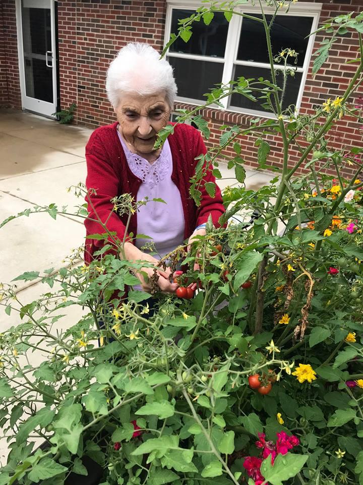 Resident picking fresh produce from Brookside's Garden